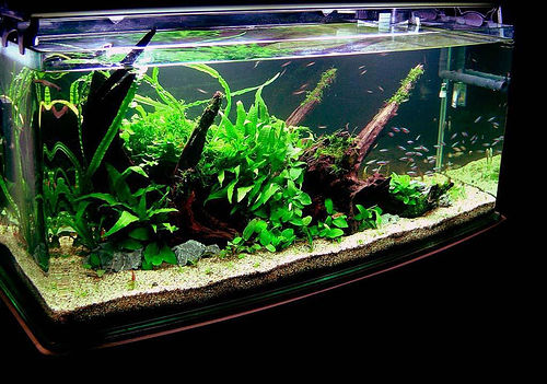 Everything you need is here create a aquarium for Planted tank fish