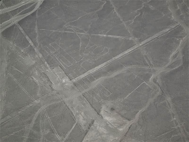 Líneas de Nazca - El pelícano