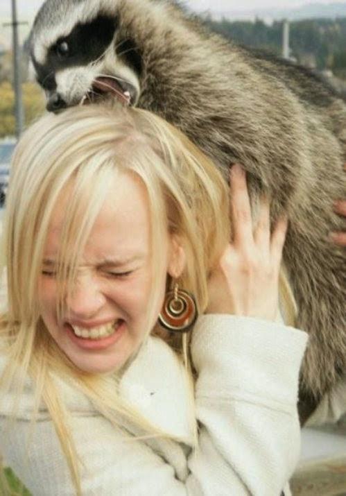 Добрые девушки и злые животные