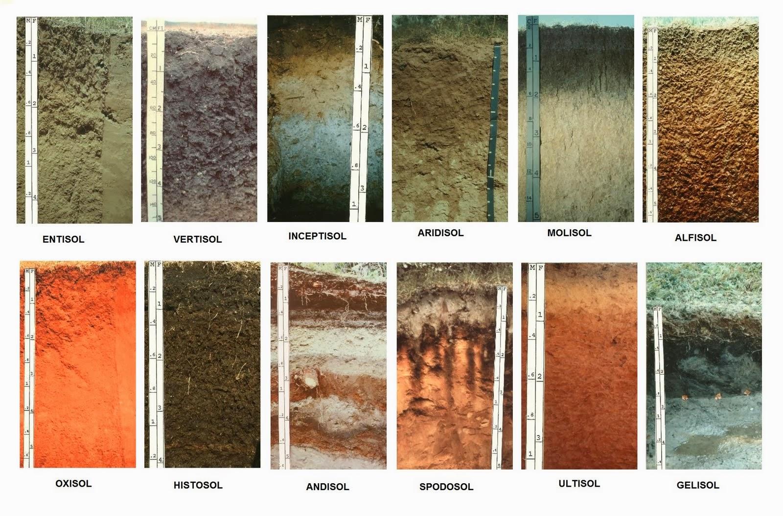 Tipos de suelos clasificasion de los suelos for Suelos y tipos de suelos