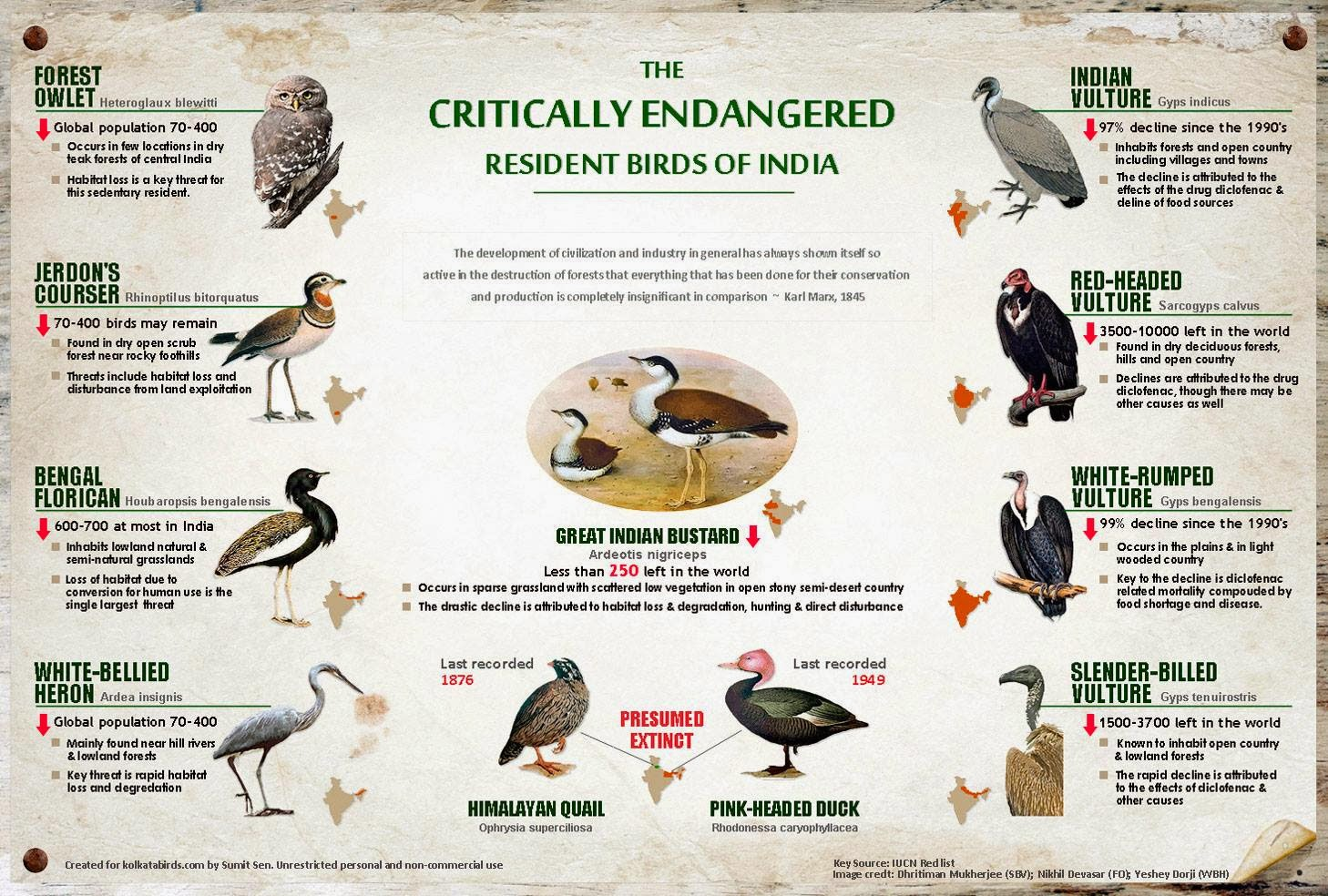 Essay on endangered birds of india