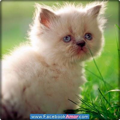 imagen de gato de triste mirada