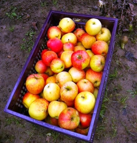 De tuinier en de kok moestuinmaandag 23 september - Krat met appel ...