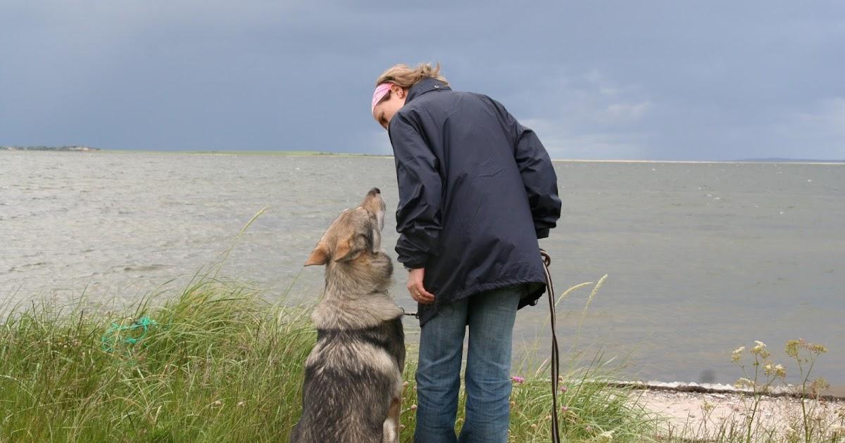 Comportementalisme et éducation canine: Se promener avec