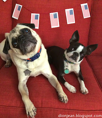 Pug and Boston terrier head tip with American flags