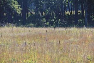 photo of WIld River prairie community