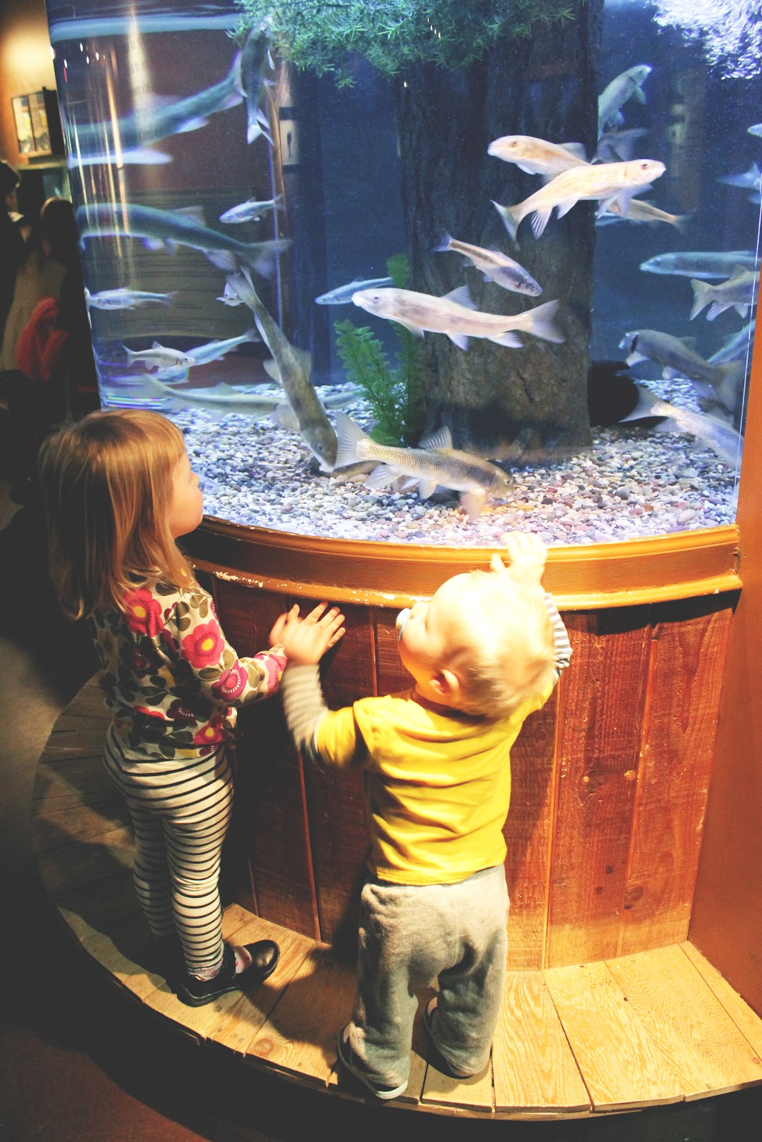 a visit to the aquarium Get this from a library a visit to the aquarium [mary lindeen] -- take a trip to the local aquarium see the fish, turtles, sharks, and other sea animals that live there.