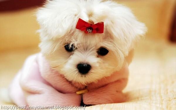Funny puppy 12