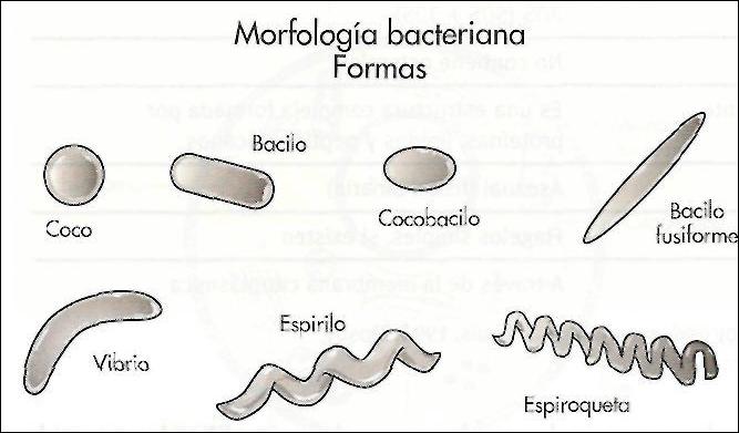 La biología y... YHON: Diferentes tipos de Bacterias.