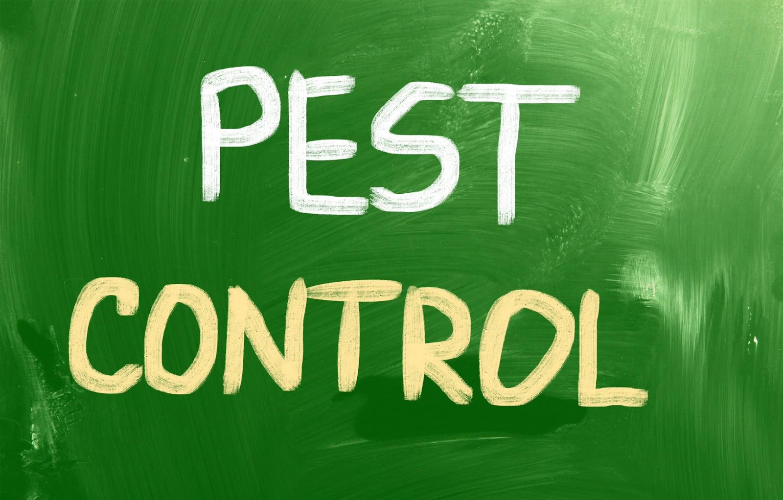 Pest Control Services : Knock em out pest control professional services