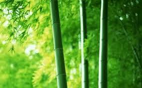 kisah sebatang bambu