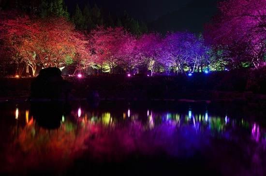 Aboriginal Cherry Blossom Festival
