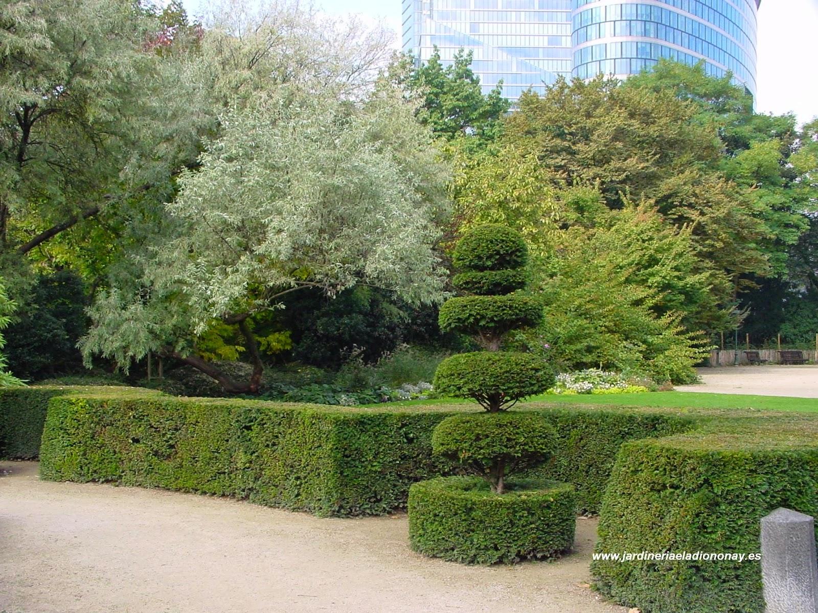 jardineria eladio nonay recorte ornamental jardiner a