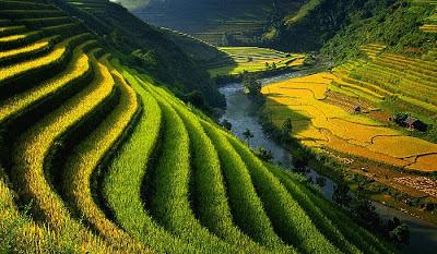 Solusi Pertanian untuk Presiden dan para Menteri-nya