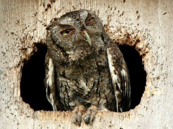 owl, funny animal pictures of the week