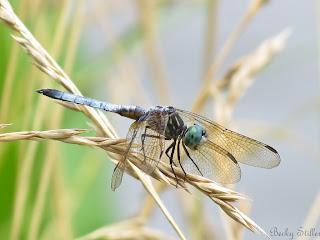 spiritual transformation, spiritual picture, dragonfly, spirituality image
