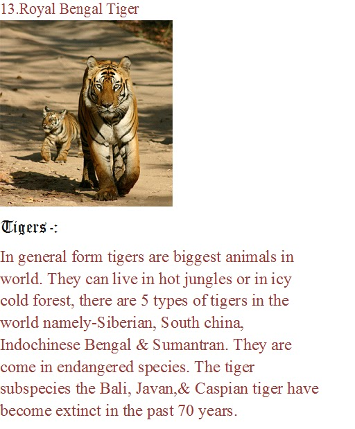poems rainbow and tyger essay Fiction essay follow/fav comparing and contrasting the tyger could have made the lamb and the tyger-good and evil together, these poems ask an almost.