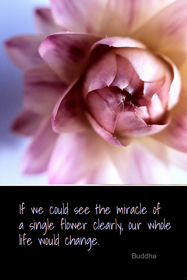 visual quote - image quotation for AWARENESS - If we could see the miracle of a single flower clearly, our whole life would change. - Buddha