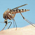 Recognize Dengue Fever and How to Prevent It