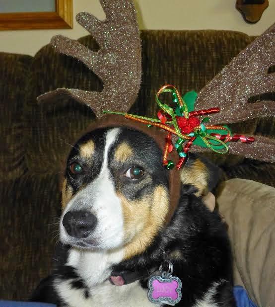 Making Christmas Wreaths