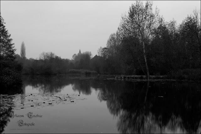 Trister November am Teich in Waiblingen