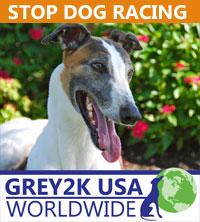 STOP DOG RACING