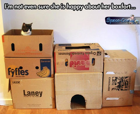 funny animals cat fort