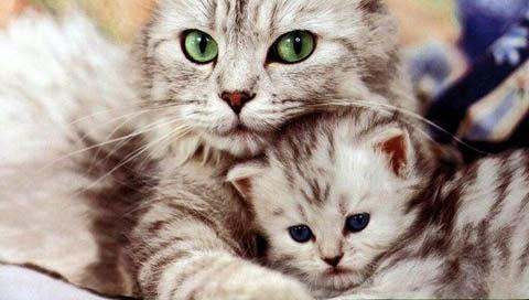 Kolostrum Susu Penting Untuk Anak Kucing (kitten)