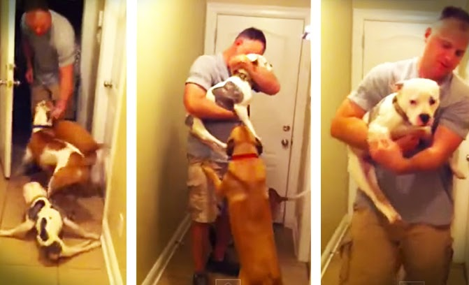 Paralyzed dog greets dad coming home from deployment
