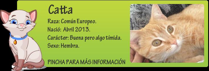http://mirada-animal-toledo.blogspot.com.es/2014/04/catta-apunto-de-morir-sepcionada-por.html