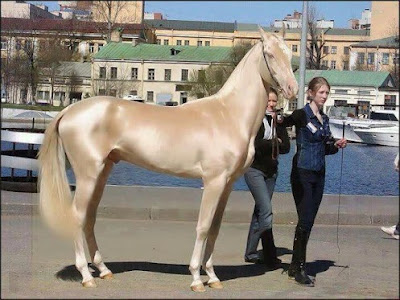 Most beautiful horse in the world in Turkey.