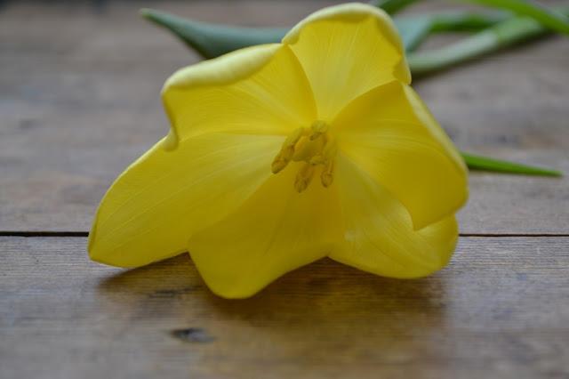 tulips_yellow