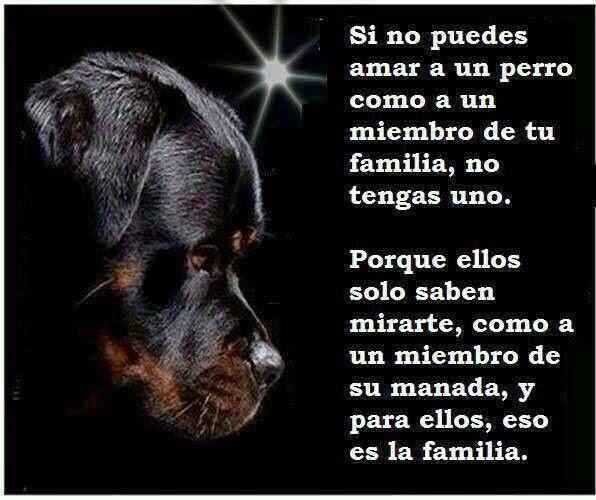 Imagenes Frases Sobre Los Perros Para Reflexionar