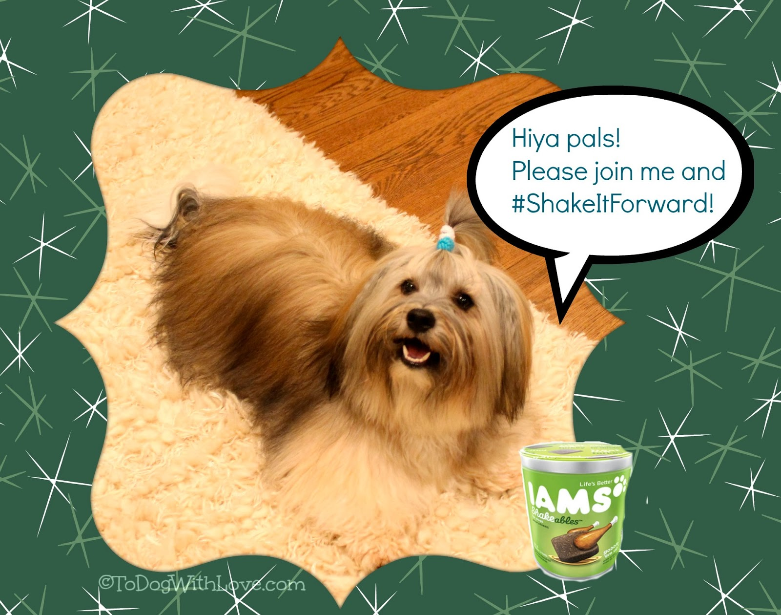 To+Dog+With+Love+%23ShakeItForward+with+Iams+and+Rocco+Havanese