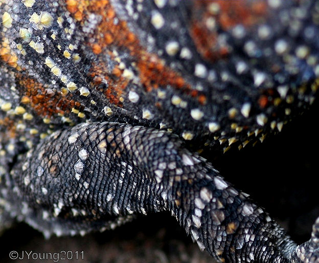 Dangerous Beetles To Humans South African Photographs Southern Tree