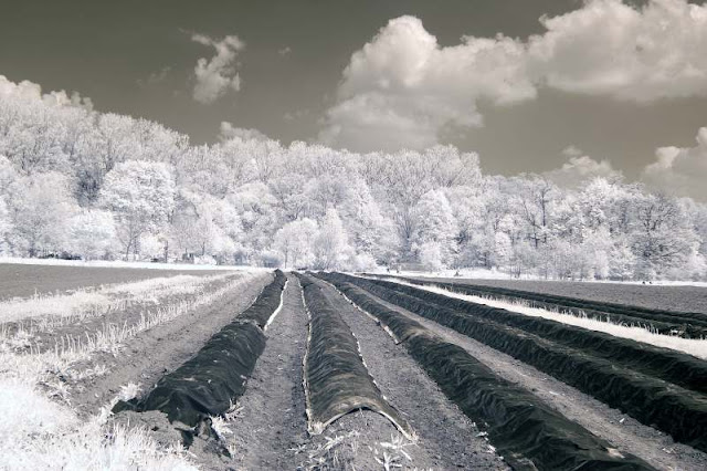 farming infrared photography