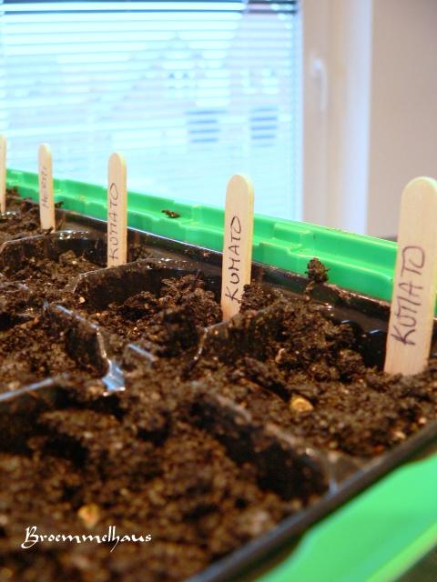 verliebt in zuhause tomaten selber s en ohne gr nen daumen. Black Bedroom Furniture Sets. Home Design Ideas