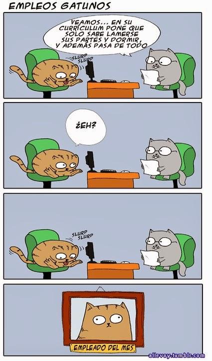 empleos gatunos - gato en entrevista de trabajo