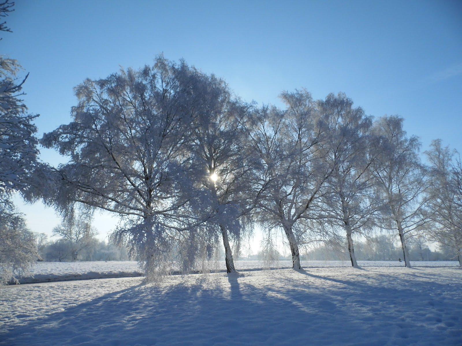 1600 x 1200 · 316 kB · jpeg, Snow Scene