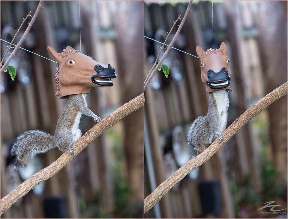 Funny animals of the week - 28 February 2014 (40 pics), squirrel eats from horse head feeder