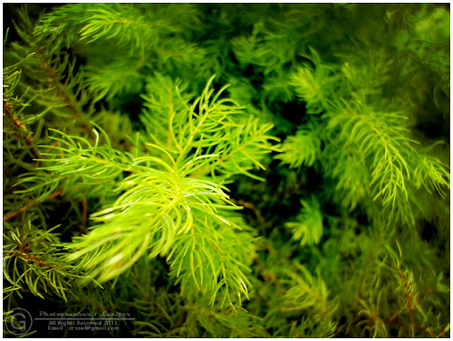 Photograph Green Leaves