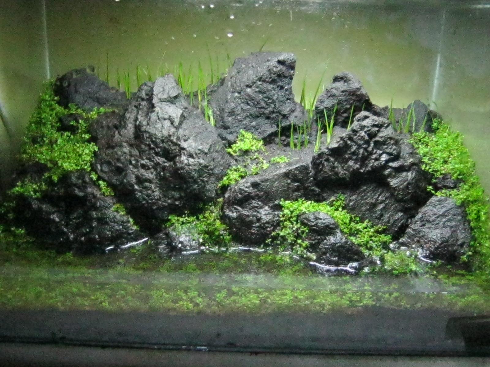 Penanaman Pada Aquarium Sebaiknya Satu Pot Dipisah Menjadi Beberapa