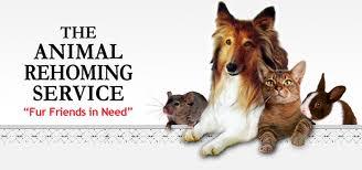 animals mollie as a burden Molly and shady need loving home contact oasisanimalrescueca toronto gta,  oasis animal rescue – a non profit organization providing durham region,.