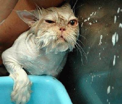 Gato sendo banhado não fica nada bonito.
