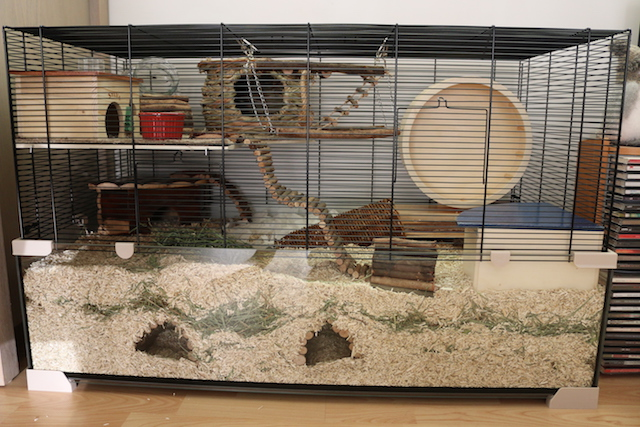 terracage pour hamster