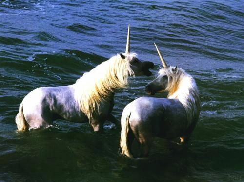 http://4.bp.blogspot.com/-BH29_xi9GHA/UKUuK3kQXUI/AAAAAAAASEs/ZSV1SbxbsbM/s1600/unicorn7.jpg