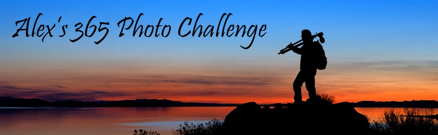 Alex's 365 Photo Challenge