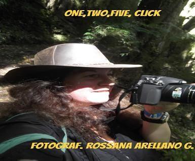 ROSSANA  HASSON ARELLANO
