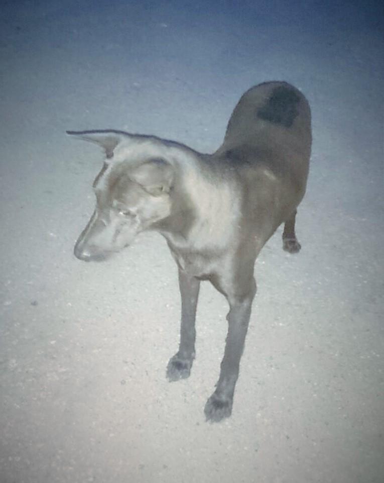 Hope Dog Rescue Vera