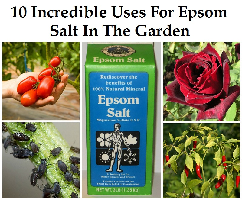 Fun Recipe World 10 Incredible Uses For Epsom Salt In